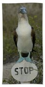 Blue-footed Booby Sula Nebouxii Beach Towel