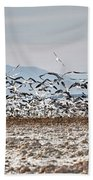 Bombay Beach Birds Beach Towel