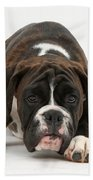 Boxer Pup Beach Towel