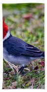 Brazillian Red-capped Cardinal Beach Towel