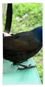 Brewers Black Bird  Beach Towel