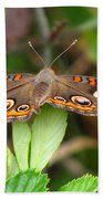 Buckeye Butterfly Beach Towel