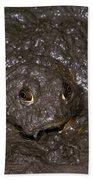 Bullfrog Beach Towel