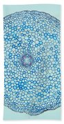 Buttercup Root Section Beach Towel by M. I. Walker