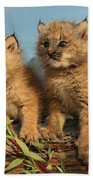 Canadian Lynx Kittens, Alaska Beach Towel