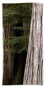 Cedar Trees, Whistler, British Columbia Beach Towel