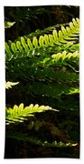 Common Polypody Beach Towel