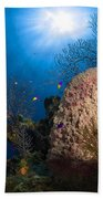 Coral And Sponge Reef, Belize Beach Towel