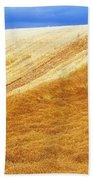 Crops, Oil Seed Rape Beach Towel