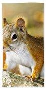 Cute Red Squirrel Closeup Beach Towel