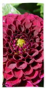 Dahlia Named Pride Of Place Beach Towel