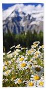 Daisies At Mount Robson Provincial Park Beach Towel