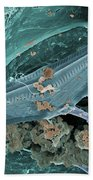 Diatom With Thermophilic Bacteria Beach Towel
