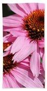 Echinacea Purpurea Or Purple Coneflower Beach Towel