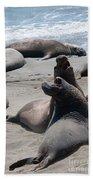 Elephant Seal Colony On Big Sur  Beach Towel