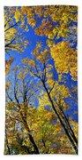 Fall Maple Trees Beach Towel