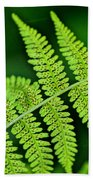 Fern Seed Beach Towel