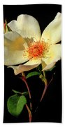 Five Petal Rose Beach Towel