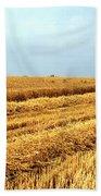 Golden Harvest Field 1 Beach Towel