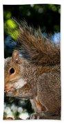 Gray Squirrel Beach Towel