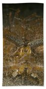 Green Ambon Scorpionfish, North Beach Towel