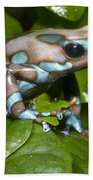 Green And Black Poison Frog Beach Towel