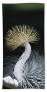 Grey Crowned Crane Balearica Regulorum Beach Towel