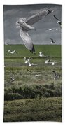 Gull Chased Tractor Beach Towel
