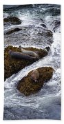 Harbor Seals Beach Towel
