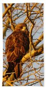 Hawk In A Tree Beach Towel