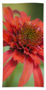 Hot Papaya Coneflower Squared Beach Towel