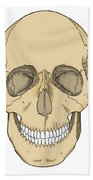 Illustration Of Anterior Skull Beach Towel