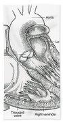 Illustration Of Heart Anatomy Beach Towel