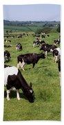 Ireland Friesian Cattle Beach Towel