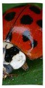 Ladybird Beetle Beach Towel