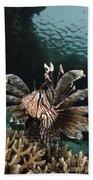 Lionfish, Indonesia Beach Towel