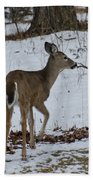 Little White Tail On The Move Beach Towel