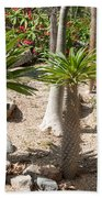 Madagascar Palms Beach Towel