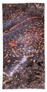 Mexican Burrowing Toad Beach Towel