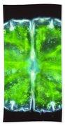 Micrasterias Beach Towel by M. I. Walker
