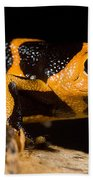Mimic Poison Frog Beach Towel
