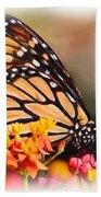 Monarch And Milkweed Beach Towel