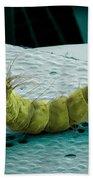 Mosquito Larva, Sem Beach Towel