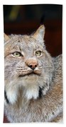 North American Lynx Beach Towel by Paul Fell