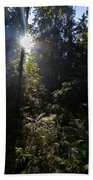 Old Forests At Evo Beach Towel