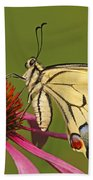 Oldworld Swallowtail Papilio Machaon Beach Towel