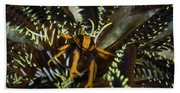 Orange And Brown Elegant Squat Lobster Beach Towel