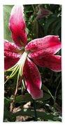 Orienpet Lily Named Scarlet Delight Beach Towel