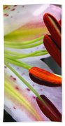 Oriental Lily Hybrid Named Mojave Beach Towel