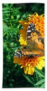 Painted Lady Butterfly  Beach Towel